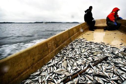 рыбаков а м экономика